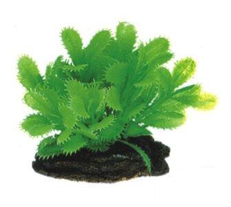 Описание растений | Аквариум - Аквариумные растения